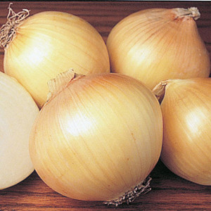 Sweet Spanish Yellow Onion