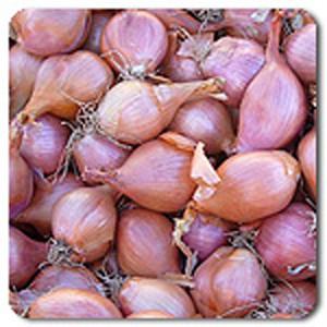 Organic Shallot Conservor Shallot