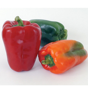 Ace Sweet Bell Pepper