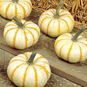 Lil Pump-Ke-Mon Pumpkin