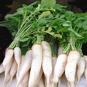 Organic White Daikon Miyashige Radish