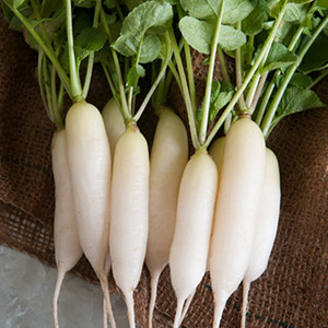 Icicle Short Top Radish