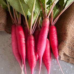Shunkyo Semi-Long Pink Radish