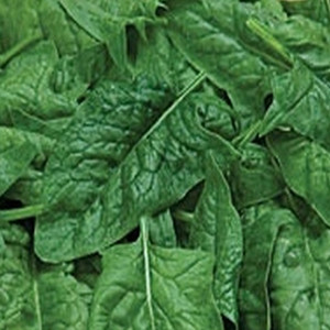 Melody Spinach