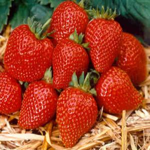 Elan Strawberry ABZ