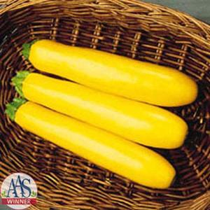 Gold Rush Summer Straightneck Zucchini -Squash
