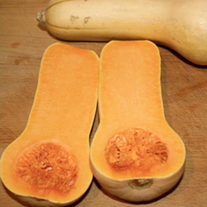 Early Butternut Winter Squash