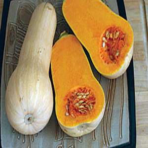 Butternut Waltham Winter Squash