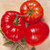Brandywine RL Red Heirloom OP Tomato