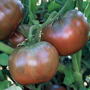 Cherokee Purple OP Tomato