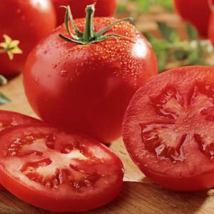 Celebrity  Tomato