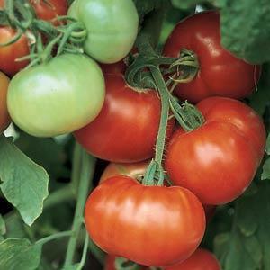 Super Fantastic Tomato