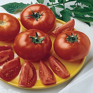 Early Girl F1 Tomato