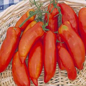 Super Italian Paste Tomato