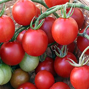 Cherry- Sweet Chelsea  Tomato