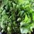 Southern Turnip Greens