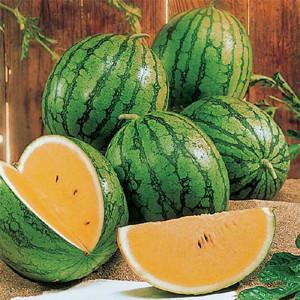 New Queen F1 Watermelon