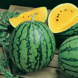 Yellow Doll F1 Watermelon