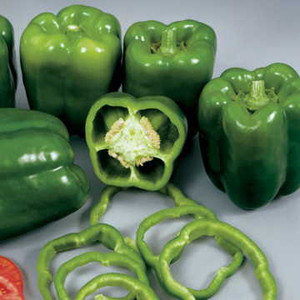 Colossal F1 Sweet Bell Pepper
