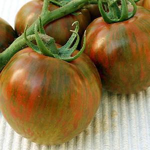 Black Zebra Heirloom OP Tomato