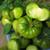 Aunt Ruby's German Green Heirloom OP Tomato