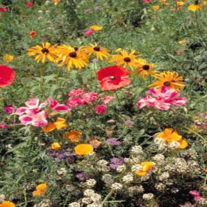 Pacific Northwest Wildflower Seed Mix
