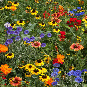 Southeast Wildflower Seed Mix