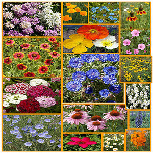 North American Wildflower Seed Mix