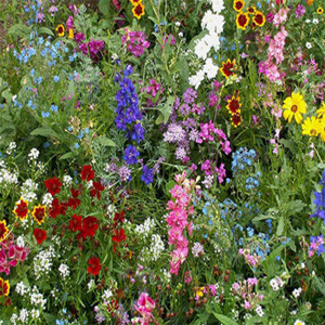 All Annual Sun Wildflower Seed Mix