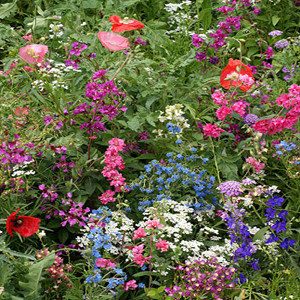 Shade Tolerant Wildflower Seed Mix