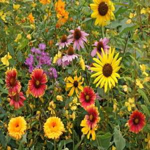 Bird Lover's Wildflower Seed Mix