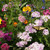 Butterfly Flower Wildflower Seed Mix
