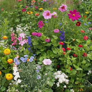 Cottage Garden Wildflower Seed Mix
