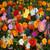 Deer Resistant Wildflower Mixture Seeds