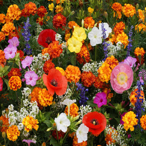 Deer Resistant Wildflower Mixture Seeds