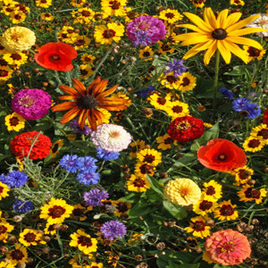 Easy Care Children's Garden Wildflower Seed Mix