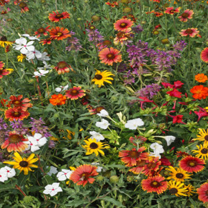 Gulf Coast Caribbean Wildflower Seed Mix