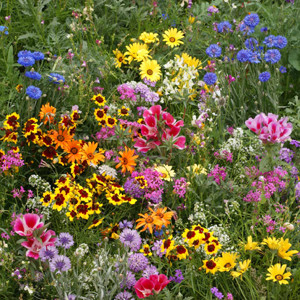 Low Growing Wildflower Seed Mix