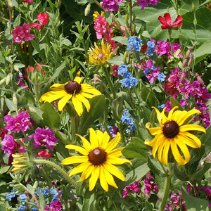 Moist Location Wildflower Seed Mix