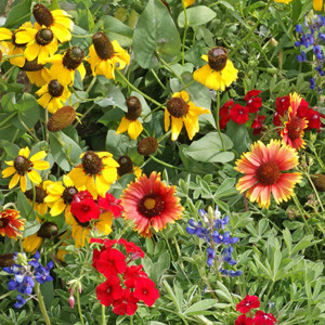 Texas-Oklahoma Wildflower Seed Mix-