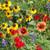 Texas-Oklahoma Wildflower Seed Mix-