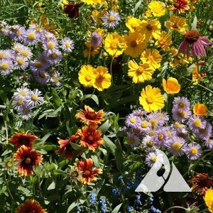 Bee Feed Pollinator Seed Mix