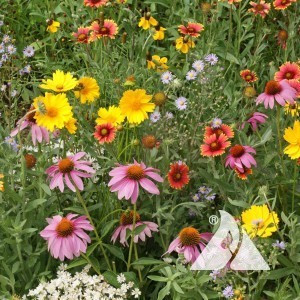 Honey Bee Pollinator Seed Mix
