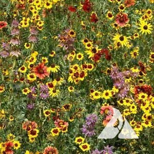 Eastern Honey Bee Pollinator Seed Mix