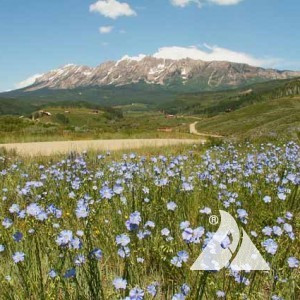 Foothills Pollinator Seed Mix