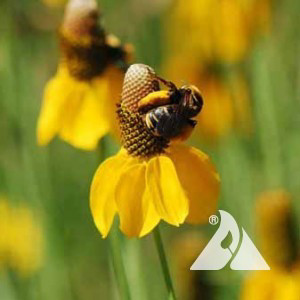 High Plains Pollinator Seed Mix