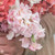 Madame Butterfly Pink Snapdragon