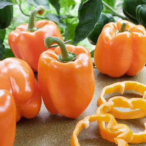 Orange Sun Sweet Bell Pepper