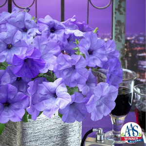 Petunia Evening Scentsation F1 Trailing- Petunia