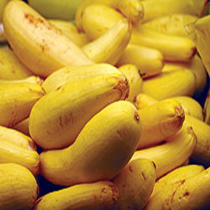 Early Prolific Straightneck Summer Squash